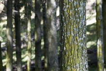 There's no incentive to plant trees, argue forest owners. Photo / APN