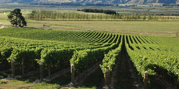 Research into climate and vineyards could grow the kiwi wine industry by 10 per cent. Photo / Supplied