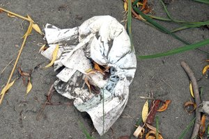 Nappies are biodegradable in landfills, not sewers. In this case, it has just been dumped. Photo / APN