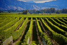 There is plenty of growth to be seen for Maori winemakers in the Marlborough region. Photo / Thinkstock