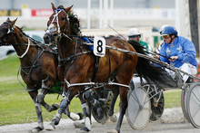 Sleepy Tripp made a Rip Van Winkle return to training with an impressive trial win.Picture / Greg Bowker