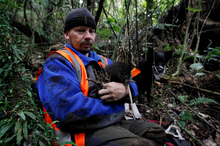 Mark Lammas with Horokio, one of the native birds living in the Maungatautari Ecological Island.  Photo / Christine Cornege