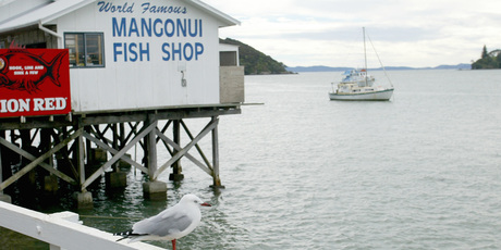 Diners at the Mangonui Fish Shop can experience fish so fresh it tastes as if it has just leapt out of the sea. Photo / Martin Sykes