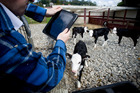 Technology is used regularly down on the farm where working the land and animals has become big business. Picture / Dean Purcell