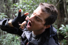 Even a close encounter with a weta isn't enough to put Bear Grylls off New Zealand. Photo / Supplied 