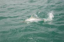 Kingfish. Photo / Supplied
