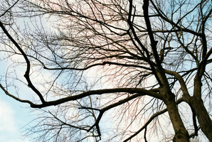 If tree limbs are posing a problem to power lines, phone Vector. Photo / Thinkstock