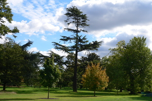 A falling branch from a tree in London's Kew Gardens has reportedly killed a New Zealander. File photo / Thinkstock