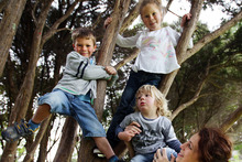 Trees offer the best views for Noel, 5, Olivia, 7, and Nate, 2. Photo / Doug Sherring