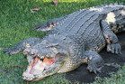 Queensland locals are angry over the state government's regulation of crocodiles. Photo / File