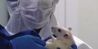 Watch: Genetically modified corn may link to cancer in rats 