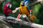 Colourful parrots at Singapore's Jurong Bird Park. Photo / Thinkstock