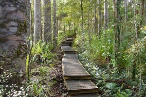 The Waitakere Ranges have an extensive network of walking and tramping tracks, as well as dozens of lookout points. Photo / Jim Eagles