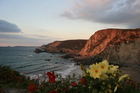 Flowers frame a view of the North Cornwall coast. Photo / Thinkstock