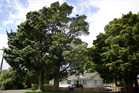 Totara at 18 Smiths Ave, Papakura, have been scheduled. Photo / Brad Roberts