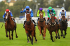 More Joyous (blue and white colours) will contest the Toorak Handicap en route to the Cox Plate. Photo / Getty Images