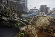 A roadside tree fallen by strong winds lies in Urasoe city as Typhoon Jelawat hit the southern Japanese prefecture of Okinawa. Photo / AP