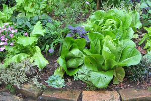 Herbs add fresh interest to any meal and are a priority for the edible garden. Photo / Supplied