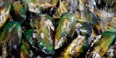 North Island Mussel Processors has been bought by Sanford and Sealord Group. Photo: Claire Fraser 