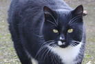 Cats were killed every year about this time, says SPCA shelter manager Sylvia Murray. Photo / Northland Age