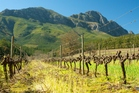 The uniquely soft light around the Cape allows fruit plantations and vineyards to flourish. Photo / Thinkstock