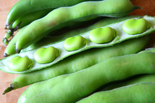 The broad bean is one of the sweetest, most tender vegetables there is. Photo / Thinkstock