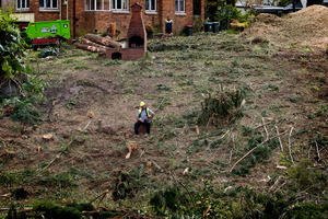 Contractors have almost completely cleared the bush from 35-39 Faulder Ave in Westmere. Photo / Sarah Ivey