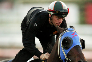 Pierro is attempting to stretch his unbeaten run to nine in the A$1 million Caulfield Guineas today. Photo / Klein Michael