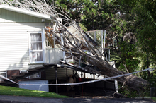 Cuddles the cat escaped by a whisker yesterday when a tree destroyed the conservatory and deck of a Beach Haven home. Photo / Doug Sherring