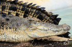 Even if their eyes invite you to go closer, don't, crocodile-patting is not advised. Photo / Martin Sykes