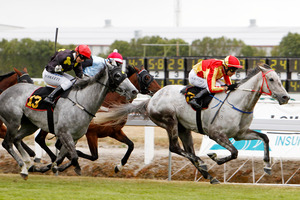 Bruce Almighty (right) can be among the leaders in race 7 today if he gets any luck. Photo / Wayne Drought
