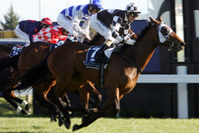 Shez Sinsational finishes over the top of Guiseppina (blue and white), He's Remarkable and Xanadu to win the Spring Stakes at Hastings on Saturday. Photo