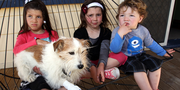 Pippa, 6, with Roofus, the family dog, Lily, 5, and Fletcher, 2, from Napier. Photo / Hawkes Bay Today