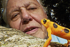 'The voice of Earth itself', Sir David Attenborough in nature. Photo / Supplied