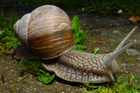 Would you use snail slime on your face?Photo / Thinkstock