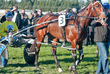 Auckland Reactor could concentrate on the NZ Free-For-All in which he may clash with Sir Lincoln. Picture / NZPA