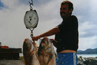 Brent Pearson boated this pair weighing over 11 and 17kg 20 years ago in the Bay of Plenty.Photo / Supplied