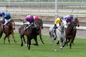 No Excuse Maggie (grey) regained the winning list with a strong finish at Hawera. Photo / Supplied