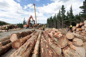 Calls from the forestry sector to limit the use of cheap imported carbon have been rejected. Photo / APN