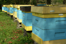 A total of 85 beehives were taken from beekeepers. Photo / Thinkstock