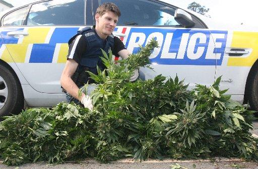 Constable Brendon Dyke with a cannabis haul.