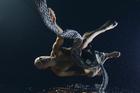 Nga Hau E Wha: Okareka Dance Company.