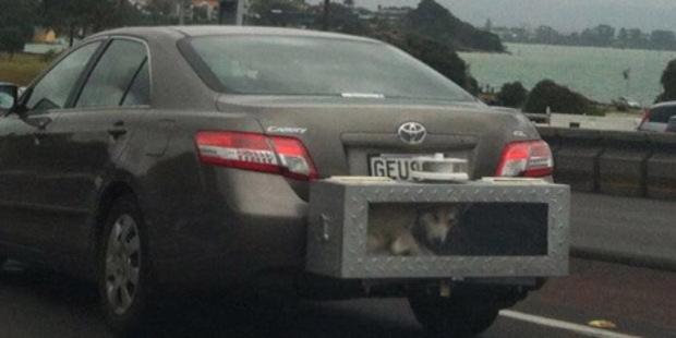 Animal cargo. Photo / Supplied