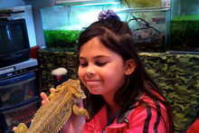 Up close and personal with a bearded dragon. Photo / Danielle Wright