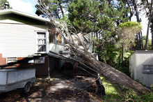 Bullying winds toppled this tree on to a North Shore house. Photo / Doug Sherring