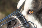Four of the five dogs were put down, with one dog needing to be muzzled in public. Photo / Thinkstock