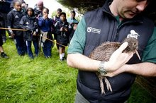 Andrew Nelson, from DOC, holds one of six Coromandel brown Kiwi that have arrived onto Motutapu Island. Photo / Dean Purcell