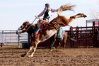 Auckland council banned rodeos in 2008.Photo / Thinkstock