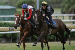Fazzle (outer) has the class to sprint well fresh at Waipa tomorrow.Picture / Greg Bowker