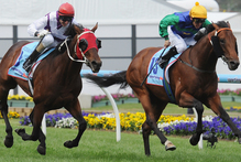 Ocean Park (outer) draws alongside All Too Hard on the way to winning the Cox Plate on Saturday.